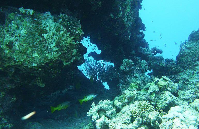 Fun Diving Makadi Bay Ganztägige Tauchfahrt Mit 2 Tauchgängen